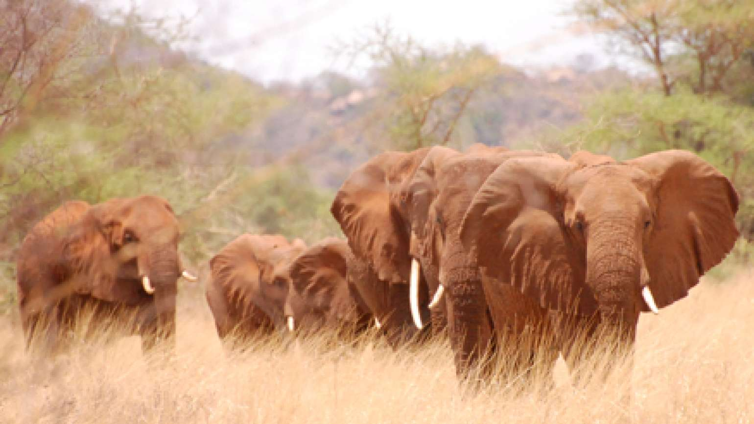 Elephants photographed by Guideposts president and CEO Richard Hopple on safari