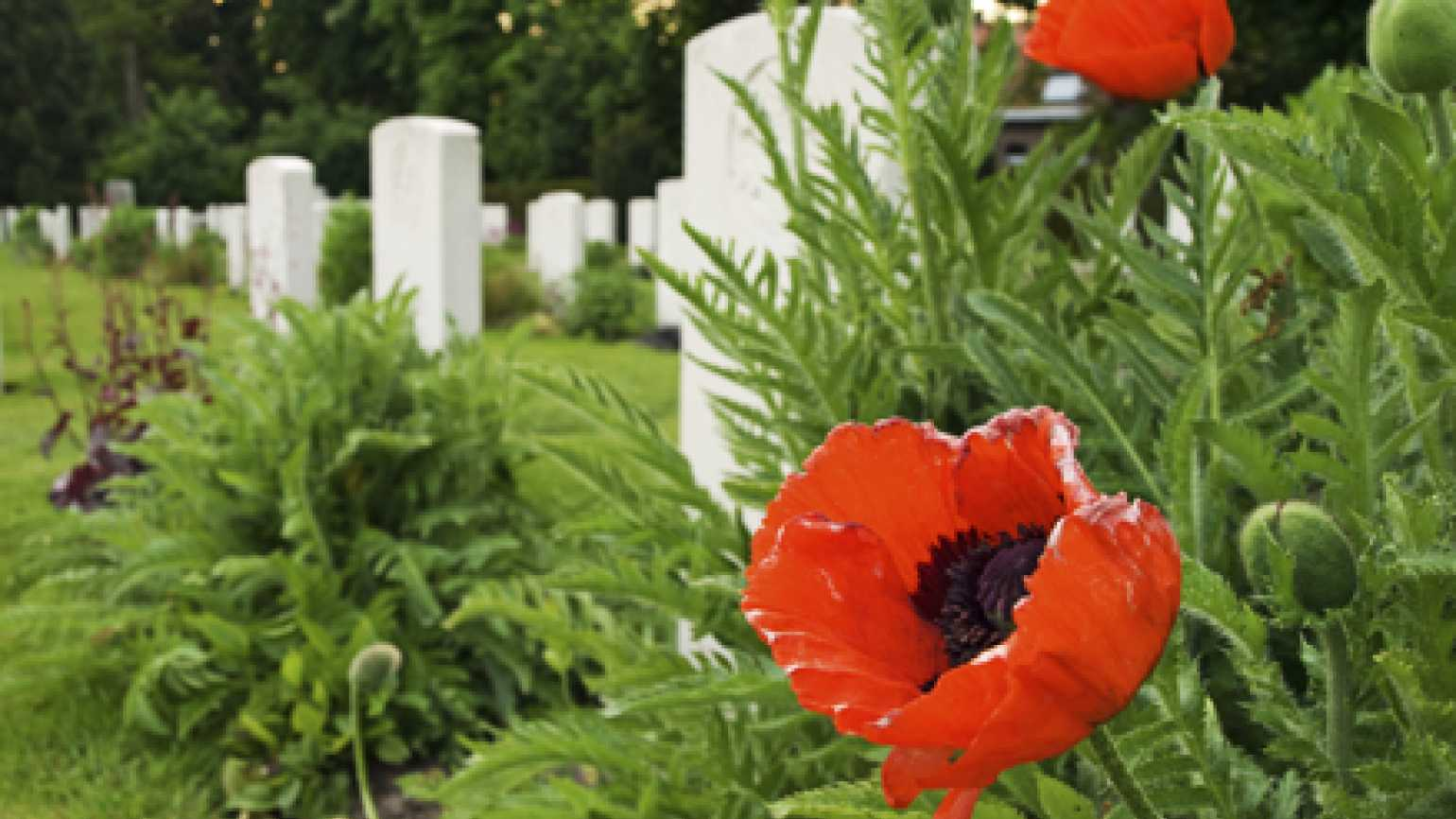 Photograph of gravestones and poppies
