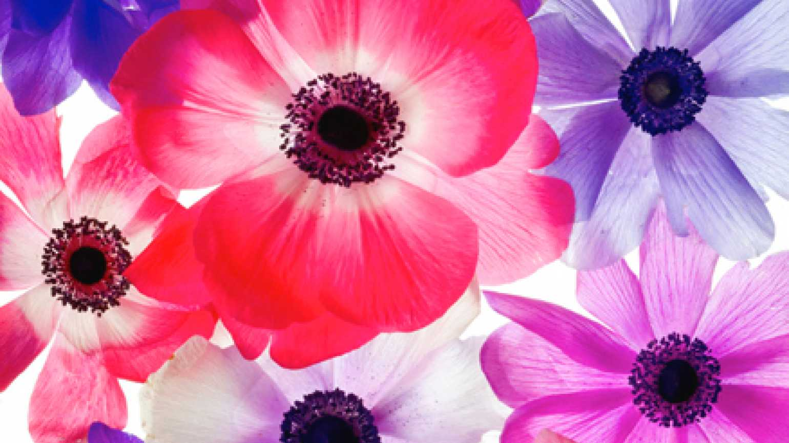 picture of flowers: picture of flowers: (Photo credit: Klaus Lucka)