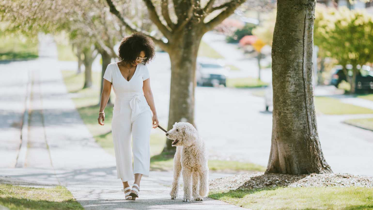 A woman enjoys time outdoors her standard poodle, taking it for a healthy walk on a sunny day.