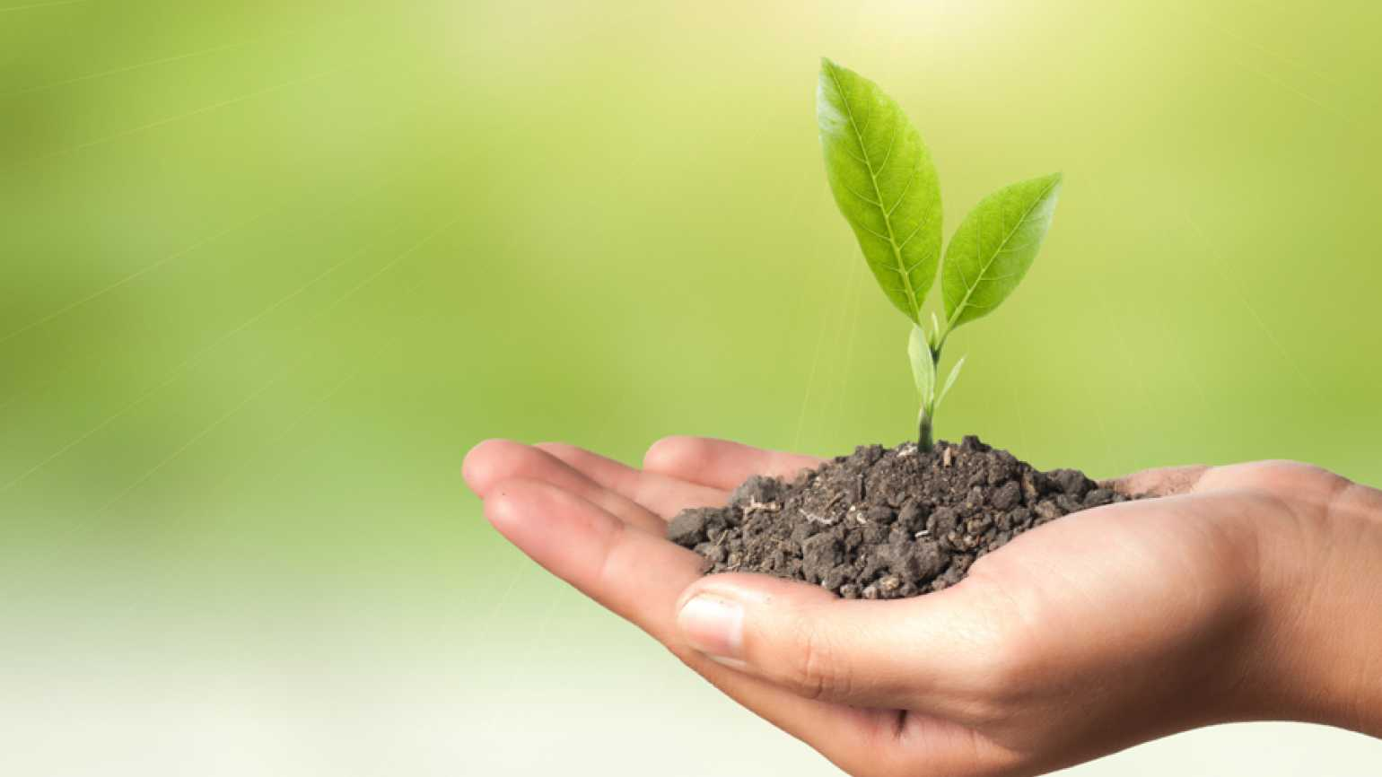 Guideposts: An outstretched hand holds a clump of soil from which a green plant sprouts