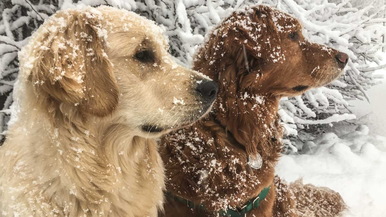 Petey (left) and Ernest enjoy a snowy outing.