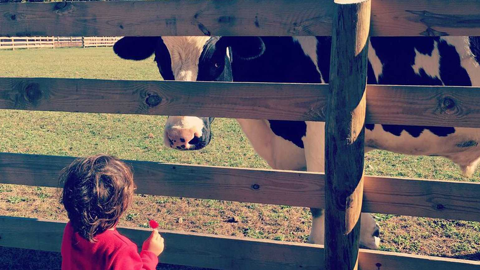 Finding Hope in an Animal Sanctuary