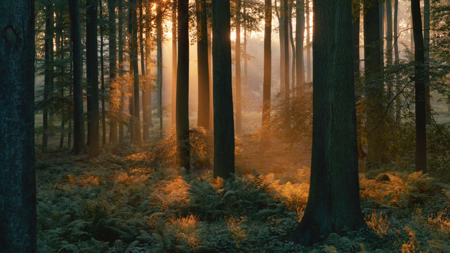 Heavenly streams of light brighten a woodsy setting.
