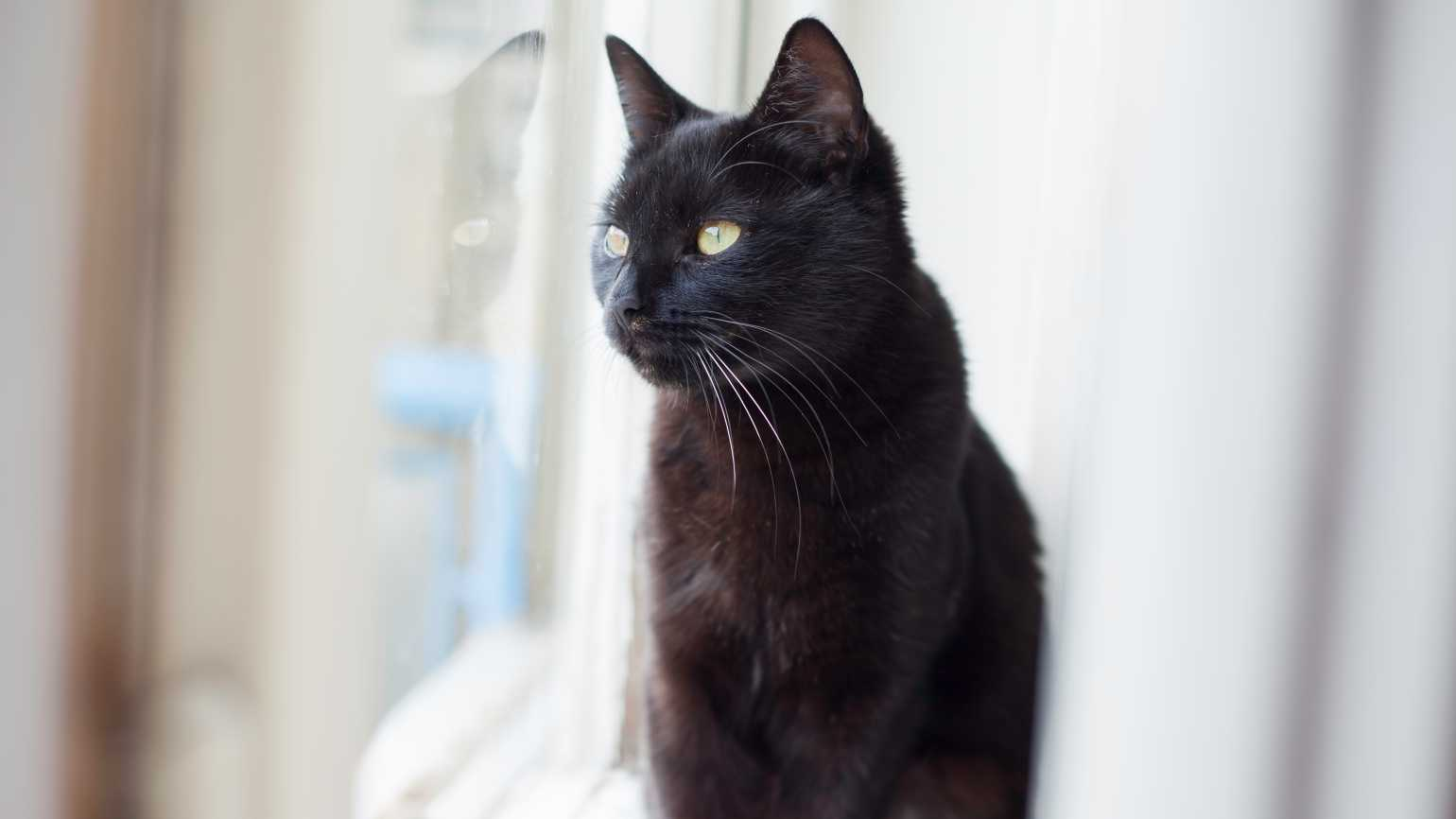 Adopting a Stray Cat Changed Her Life
