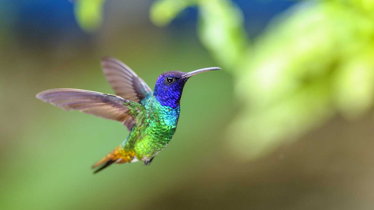 A colorful hummingbird.