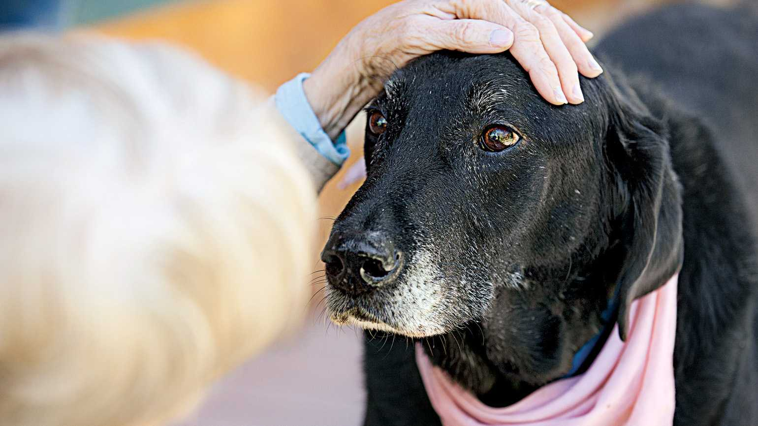 Love and Devotion: Linda wasn't sure if she would ever get a dog again.