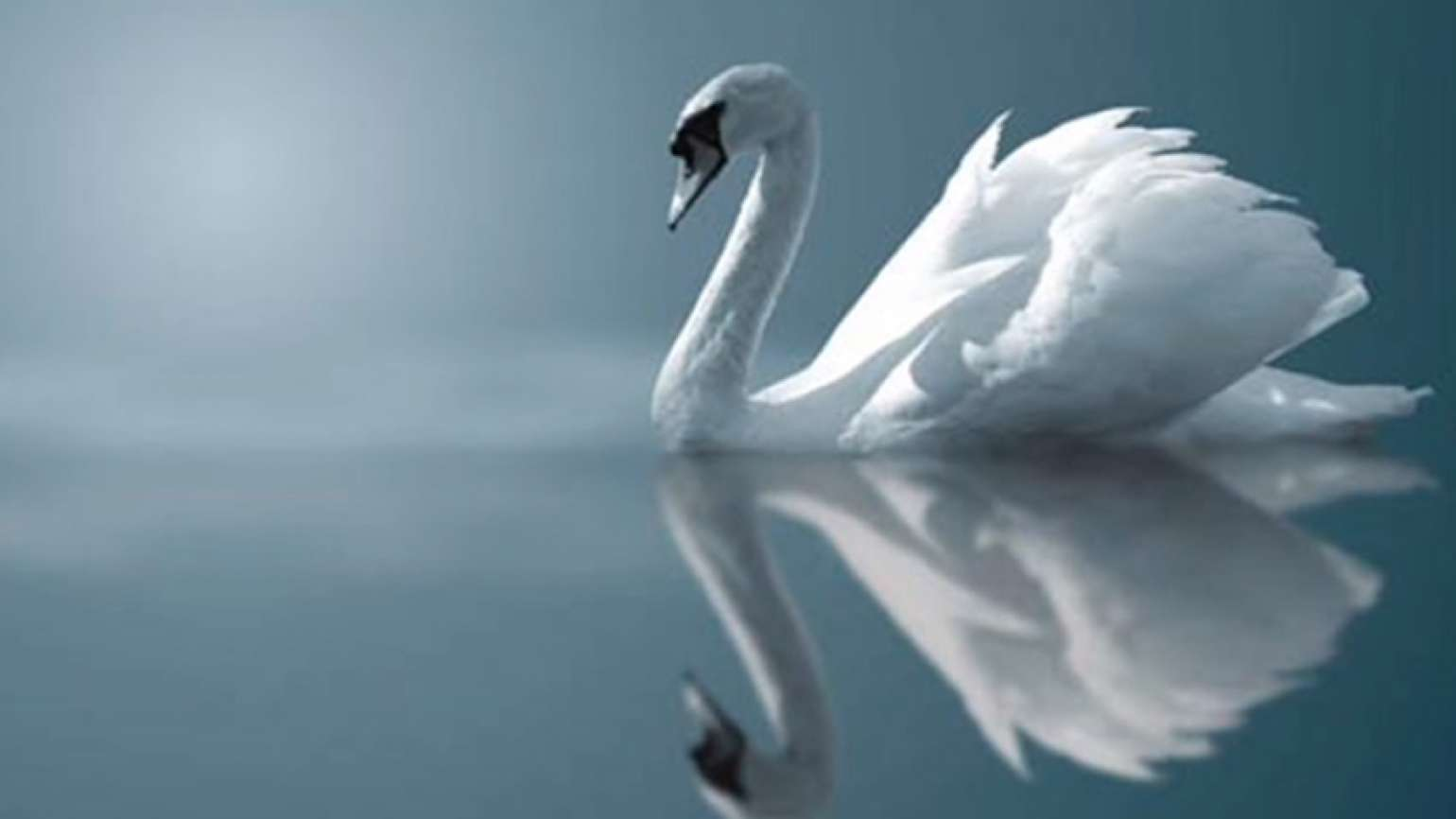 Guideposts: A graceful swan on a still lake.