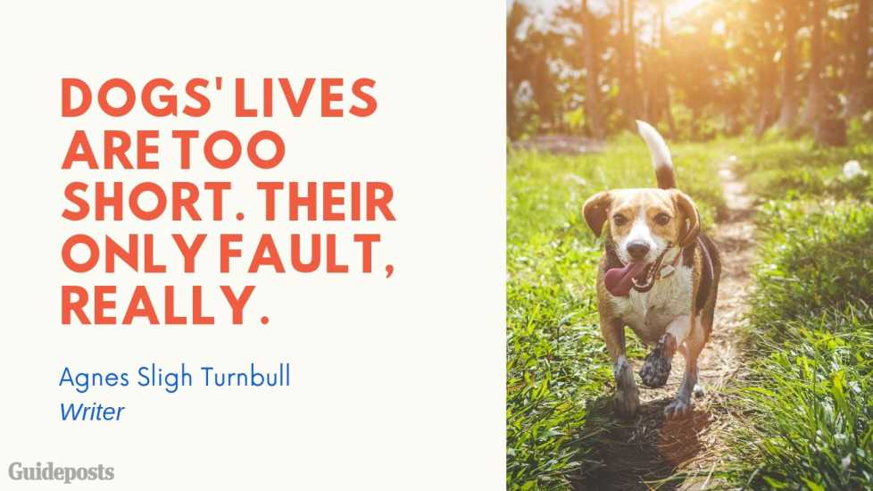Sentimental Dog Quote: Dog's lives are too short. Their only fault, really. —Agnes Sligh Turnbull, Writer Dog Lover