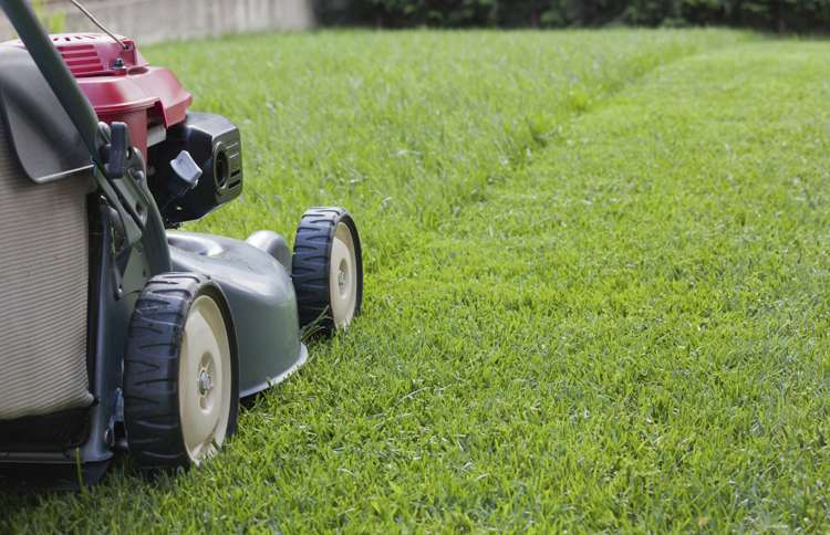 Nothing says summer like the intoxicating scent that accompanies mowing the lawn.