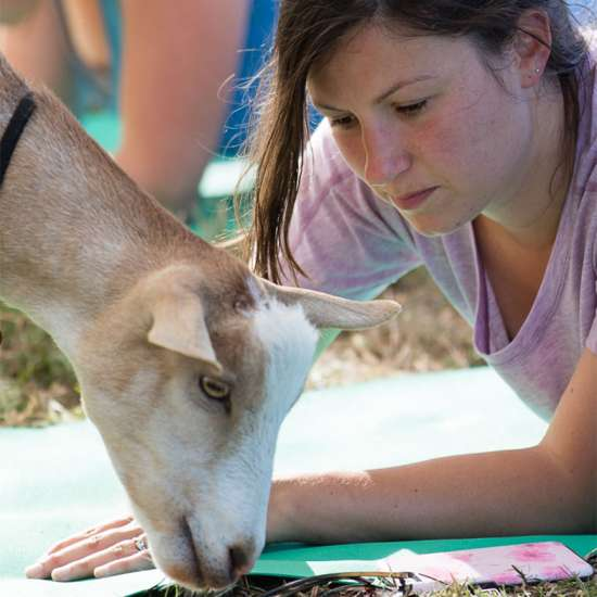 Goat Yoga: Morse says these social animals bring a meditative quality to class. Better Living Health Wellness