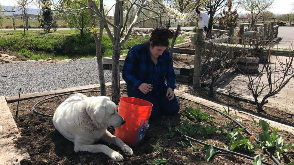 Lindsey working on Red Barn Farms with a Labrador.