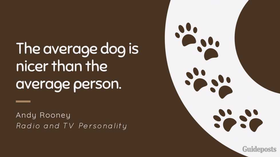 Sentimental Dog Quote: The average dog is nicer than the average person. —Andy Rooney, Radio and TV Personality dog lover