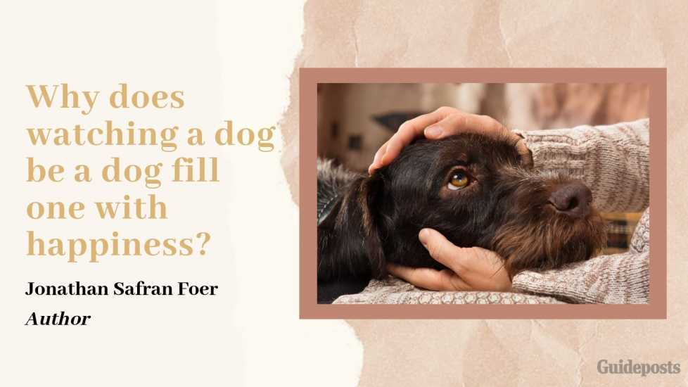 Sentimental Dog Quote: Why does watching a dog be a dog fill one with happiness? —Jonathan Safran Foer, Author dog lover