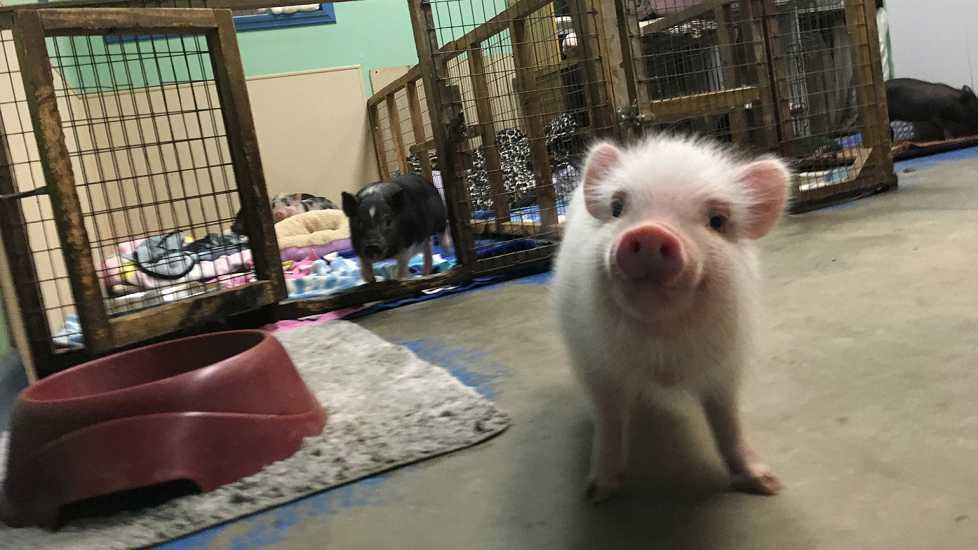 The baby piglets are my favorites!