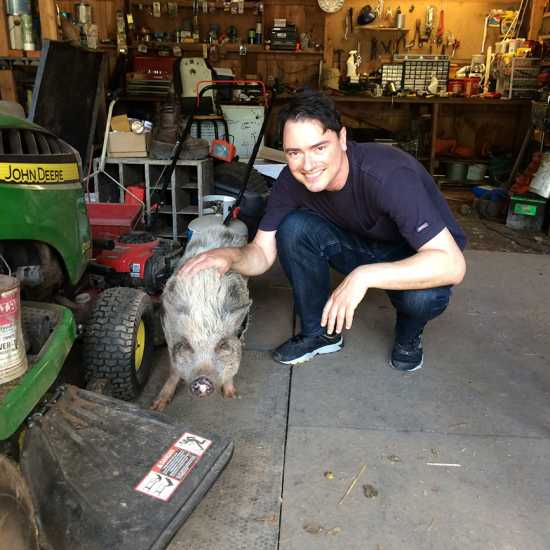 The pigs are allowed to go anywhere—the barn, the shed, and even the owner's house.