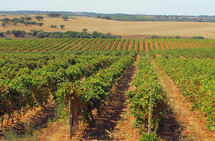The fields where grapes for Alentejo's full-bodied wines are grown
