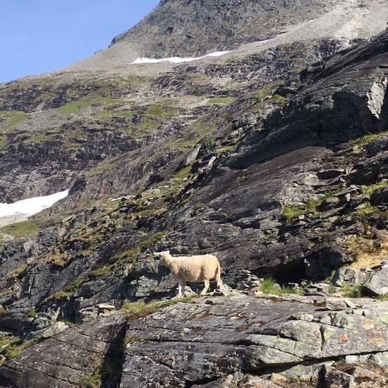 "The parable of the ""lost sheep"" on the hills about Geirangerfjord, Norway"