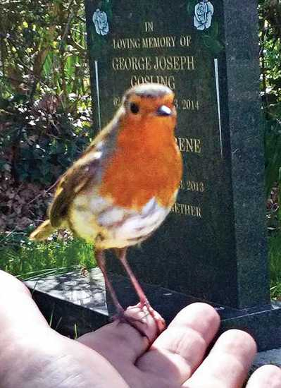 The brazen robin perches on Marie Robinson's finger