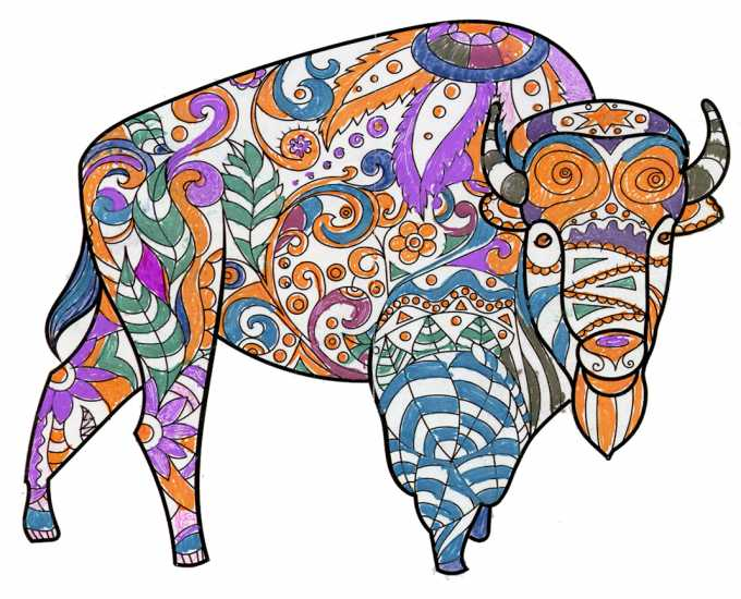 Bison colored by a reader from Atlanta