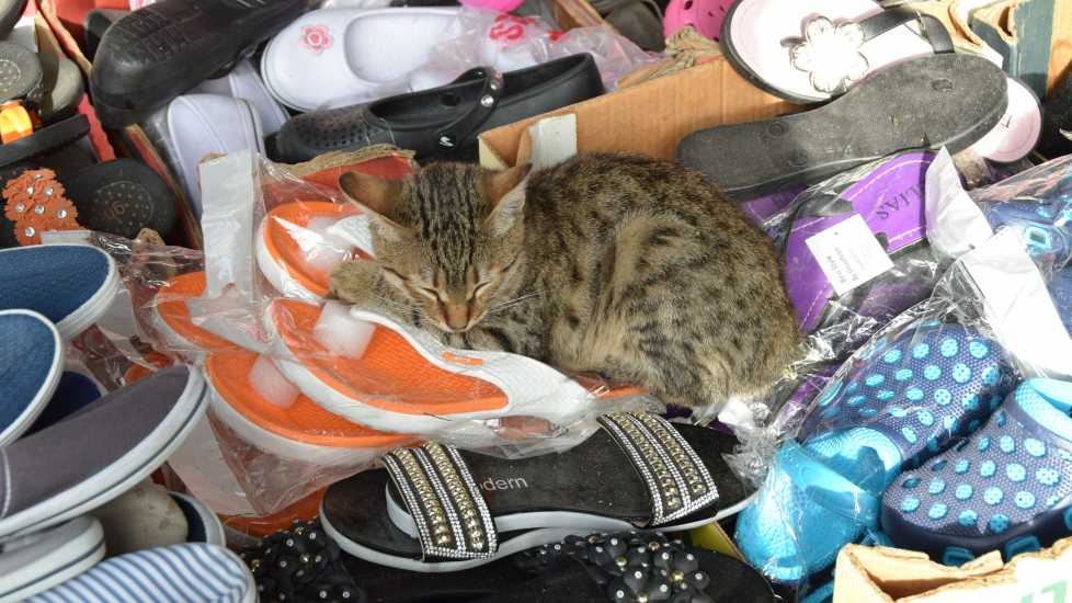 Cat in a pile of shoes in Acre, Photo credit: Brooke Obie