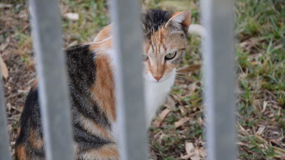 Cat sits behind fence in Acre, Photo credit: Brooke Obie
