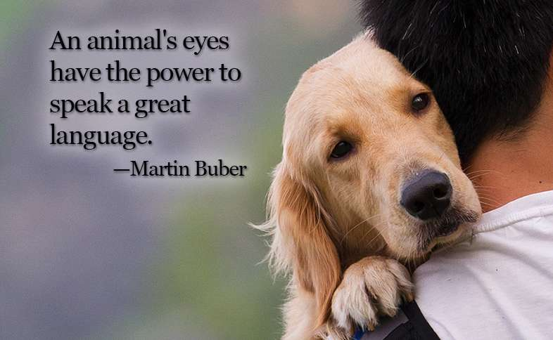 An animal's eyes have the power to speak a great language. ―Martin Buber