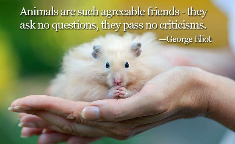 Animals are such agreeable friends ― they ask no questions, they pass no criticisms. ―George Eliot