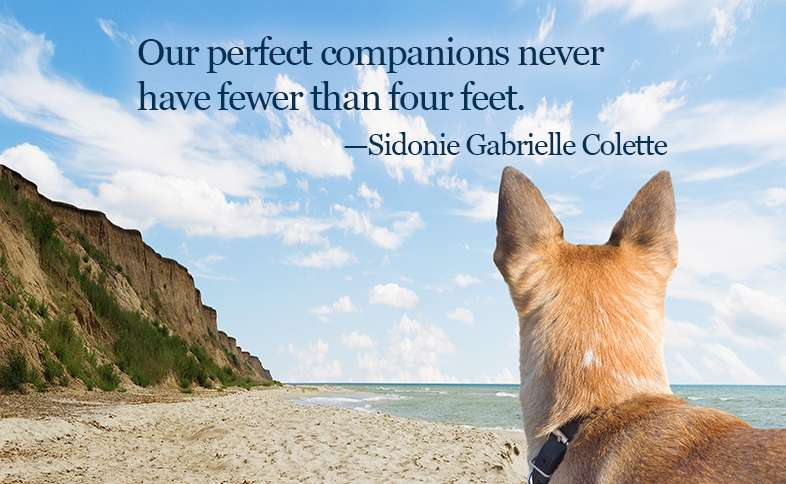 Our perfect companions never have fewer than four feet.―Sidonie Gabrielle Colette