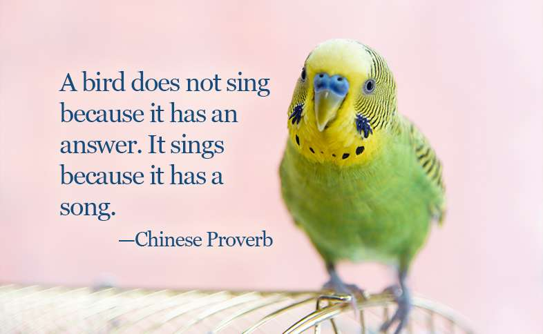 A bird does not sing because it has an answer. It sings because it has a song. ―Chinese Proverb