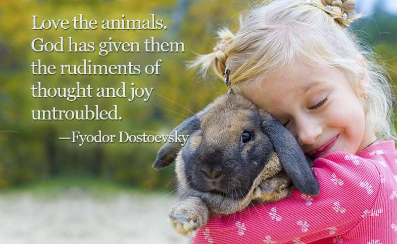 Love the animals. God has given them the rudiments of thought and joy untroubled. ―Fyodor Dostoevsky