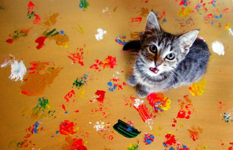Artist Cat creates Rescue Cat Art to raise money for the care of abandoned and orphaned pets.
