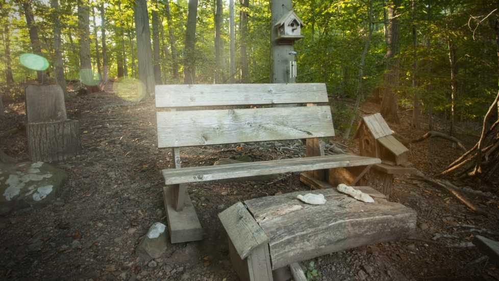 The Bench at Mabel's Bluff in Short Hills, NJ.