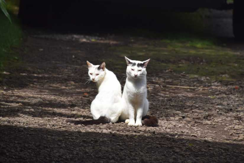 twin cats posing at Halawa Valley, photo credit: Brooke Obie