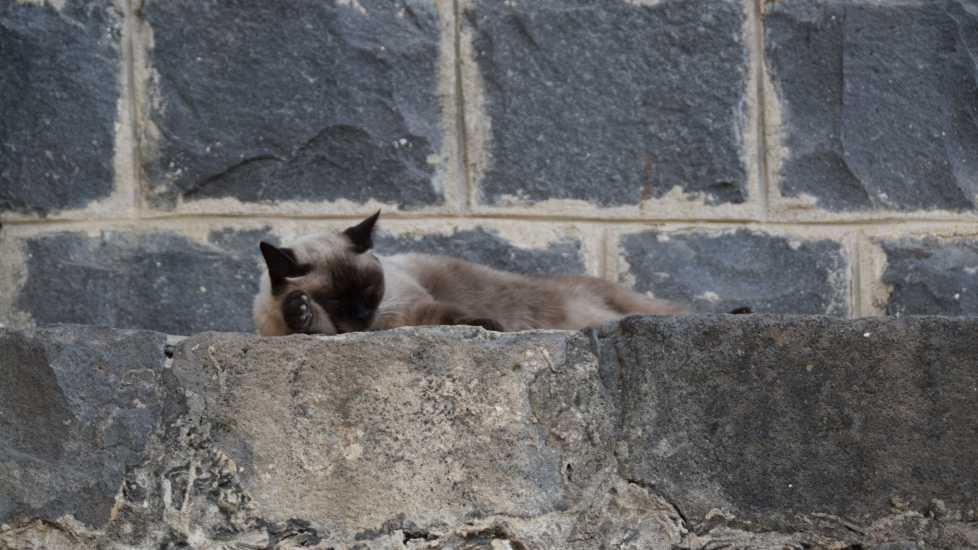 Cat on a ledge of the Chapel of the Primacy, Photo credit: Brooke Obie