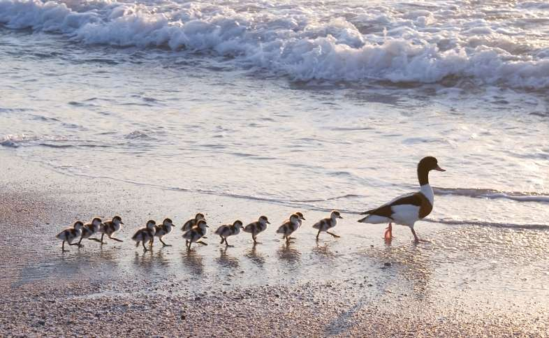 Put Your Financial Ducks in a Row