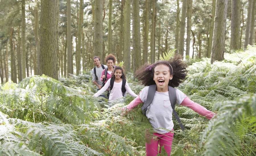 children exploring the forest, camping with their parents