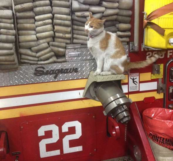 At a firehouse on the Upper East Side of Manhattan, an orange-and-white cat named Carlow takes his job as firehouse cat very seriously.