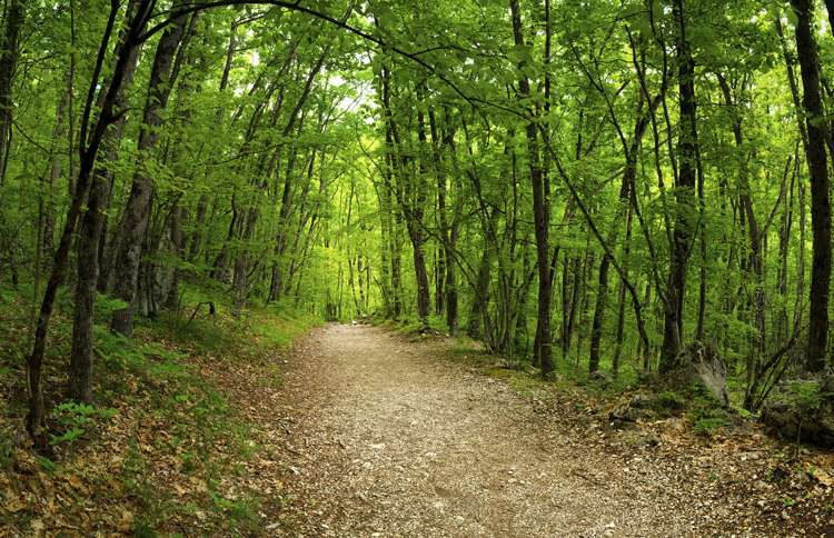 A scenic and inspiring hiking trail through verdant green woods