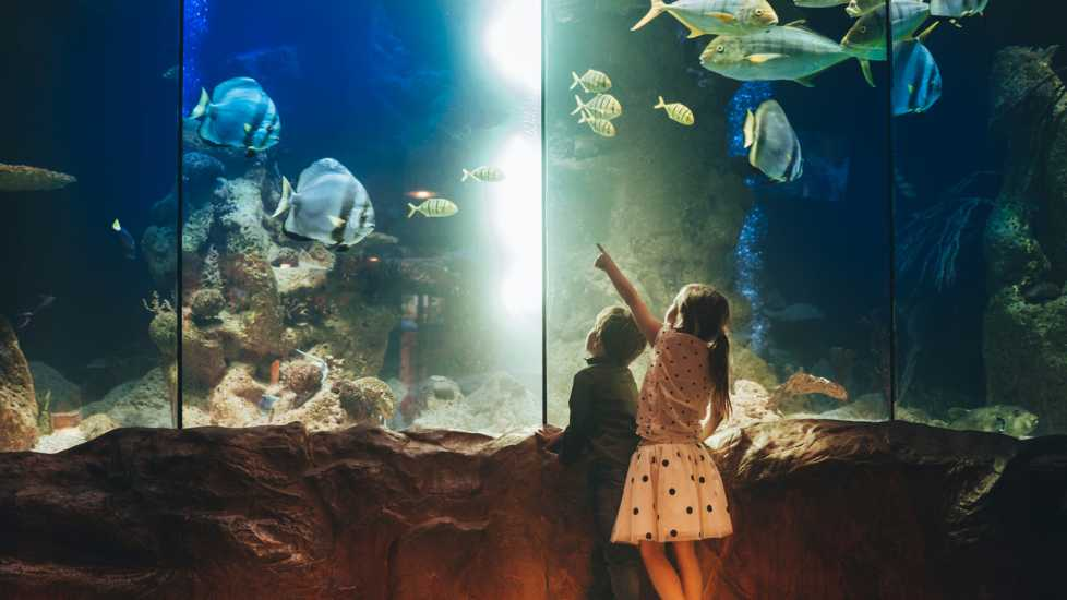 Innocence of Youth: Two kids pointing at sea animals in an aquarium. Mysterious Ways Editors Share what makes them feel awe inspiration miracles gods grace