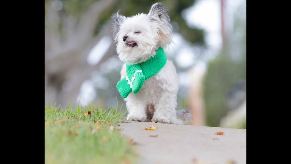 Norbert in a green scarf, inhaling the beauty of life outdoors.
