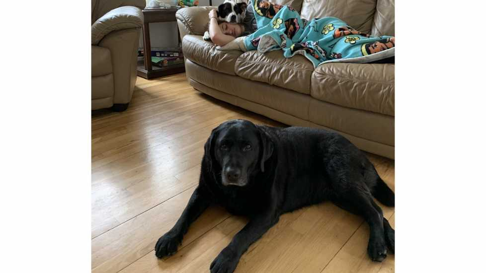 Penny (black Lab) and Lincoln (Lab mix).
