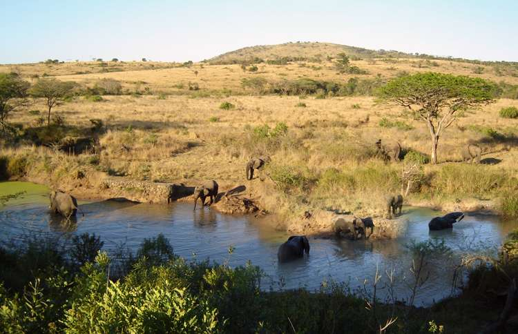 Guideposts: Elephants at a watering hole