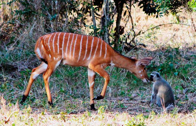 Guideposts: Two unlikely animals forge a friendship at Thula Thula