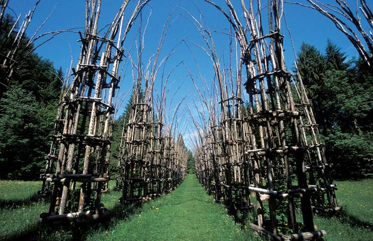 Guideposts: The Tree Cathedral was designed by Italian artist Giuliano Mauri and is still being built—by the trees themselves.