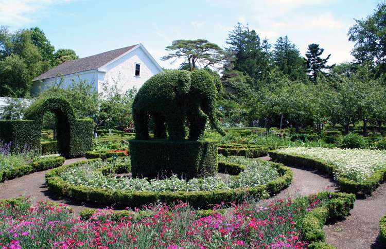 Guideposts: A shrub trimmed and shaped to resemble an elephant at Green Animals in Portsmouth, Rhode Island