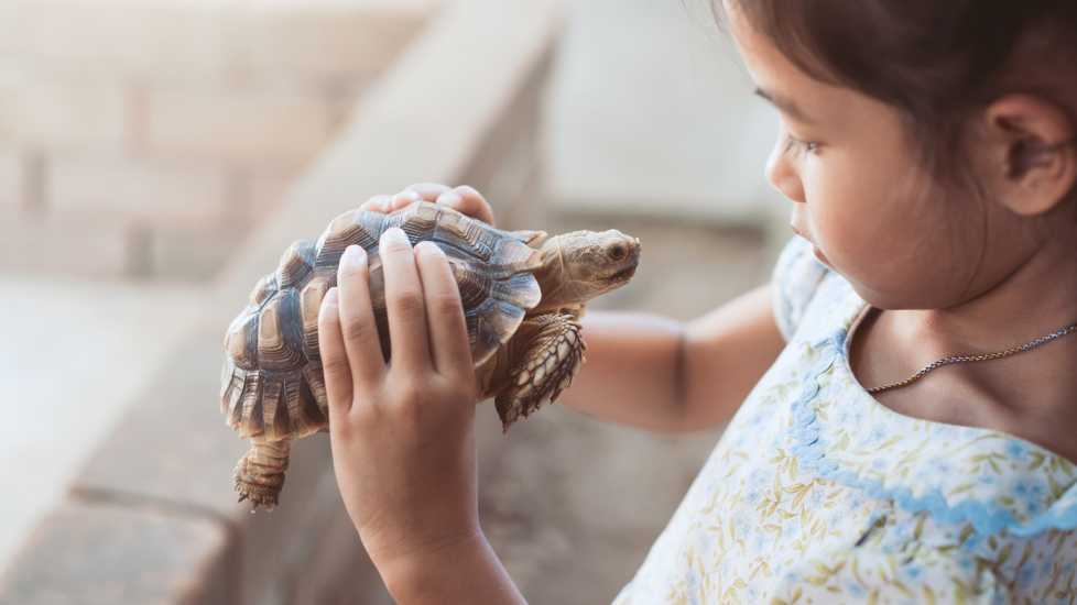 A young Asian girl with her pet turtle.