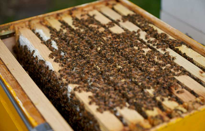 A few hundred of Timothy and Nicole's bees