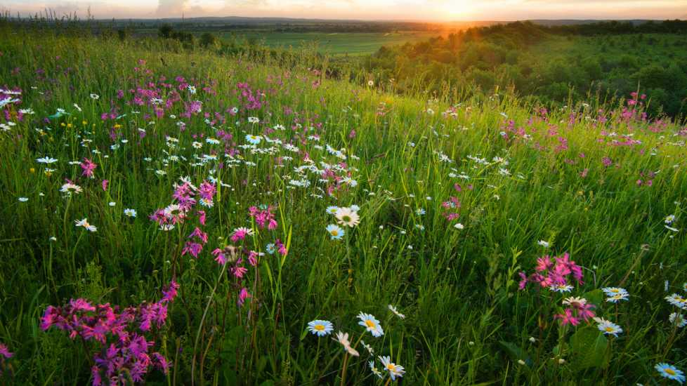 A spring field of wild flowers.