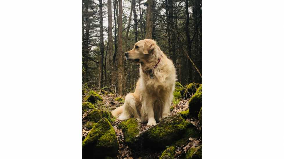 Gracie the Dog: : Mysterious Ways Editors Share what makes them feel awe inspiration miracles gods grace
